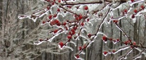 Icy-Tree1-533x222